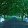 HotelGallery_Lanzerac-Drive-Way-300x167